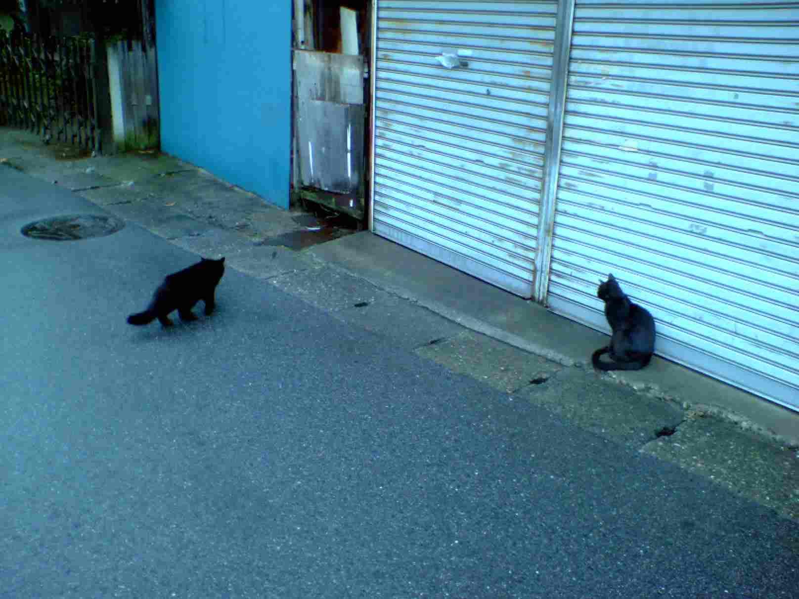 黒猫2匹 幕張にて